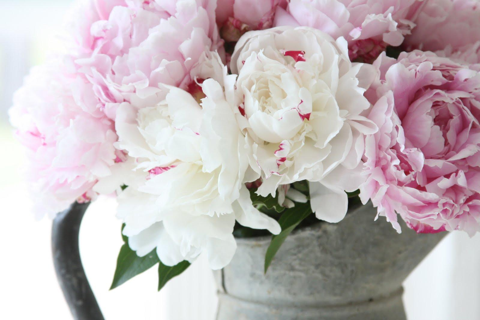 White Peonies Wallpaper