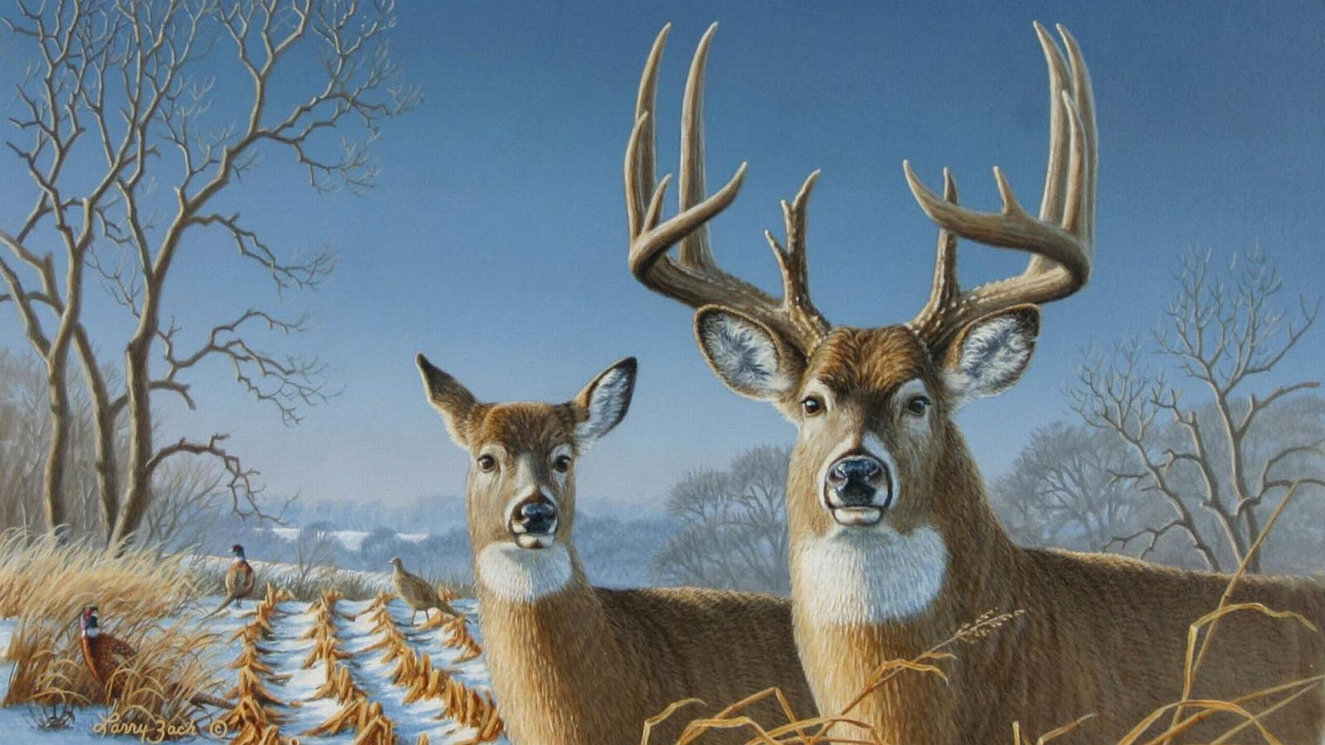 White Tailed Deer Wallpaper