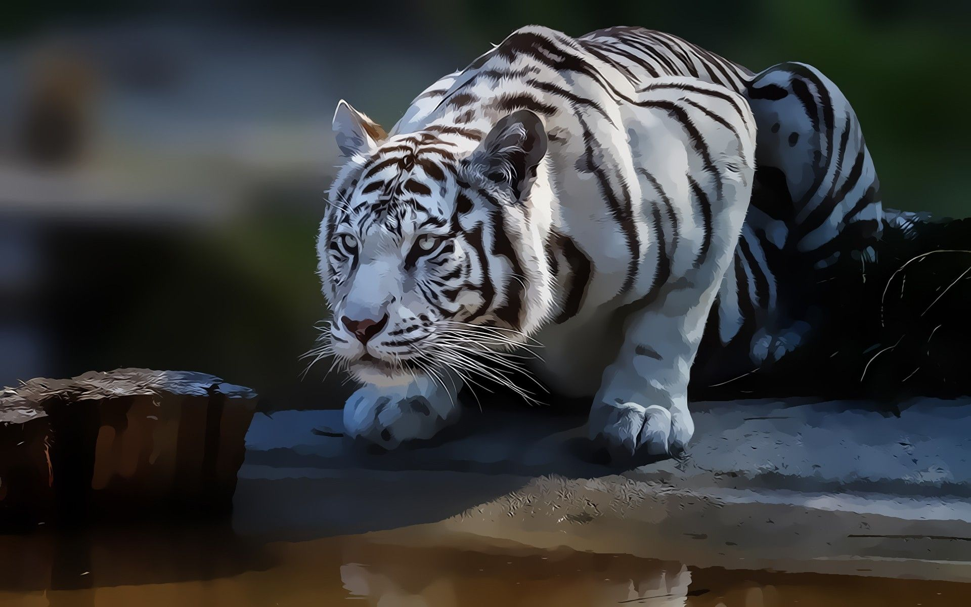 download white tiger wallpaper hd 1080p gallery