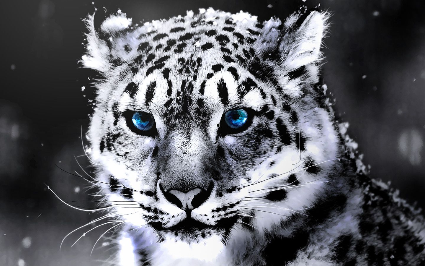 White Tigers Wallpapers