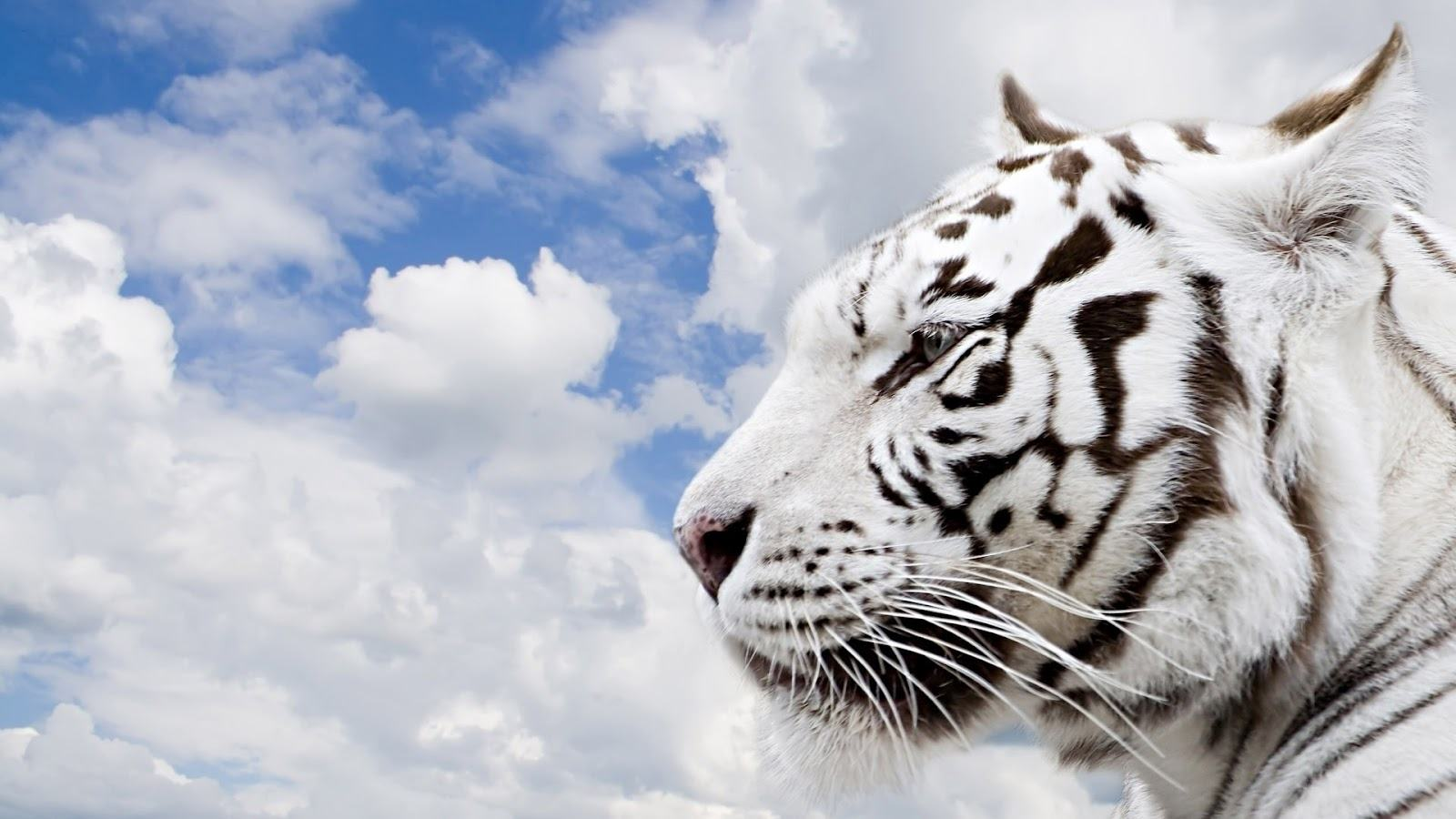 Wild Animals Wallpaper Download