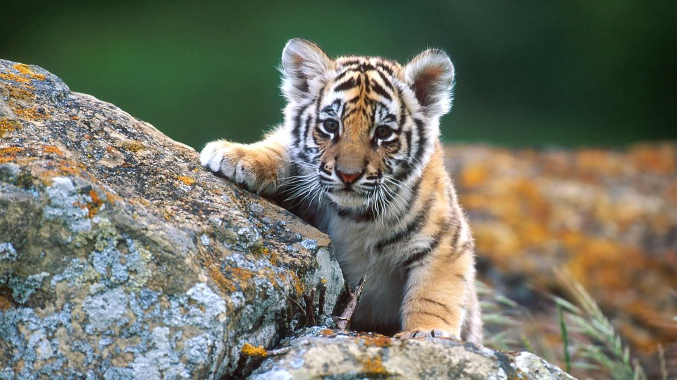 Wild Life Wallpapers