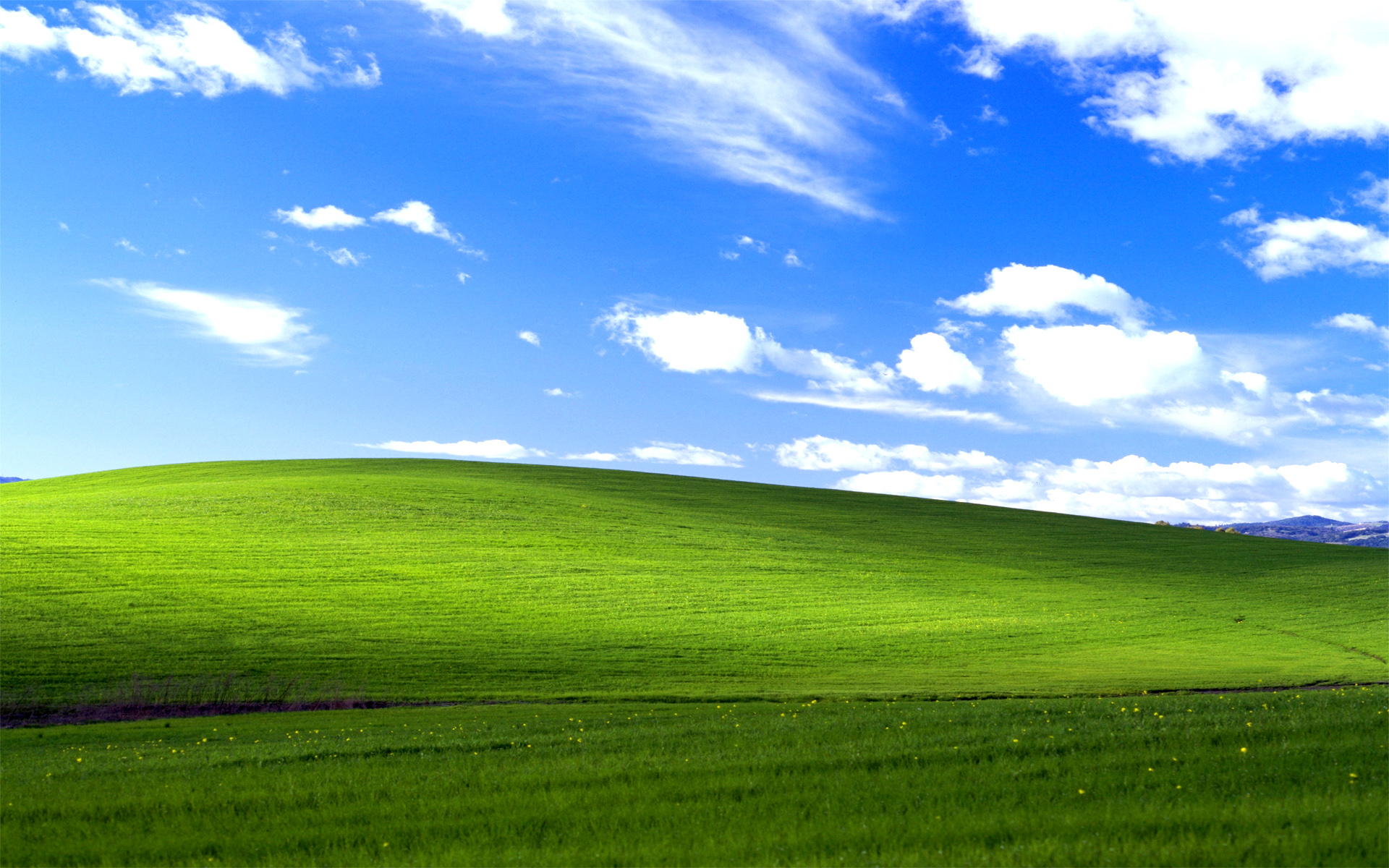 Windows Xp Grass Wallpaper
