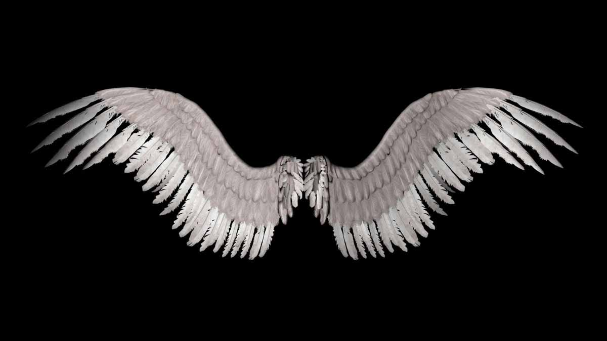 Wings Wallpaper