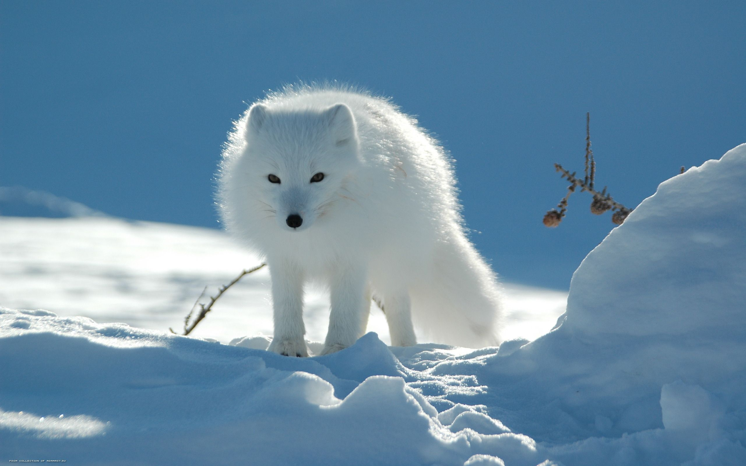 Winter Animal Wallpaper