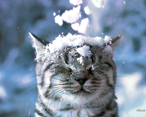 Winter Animals Wallpaper