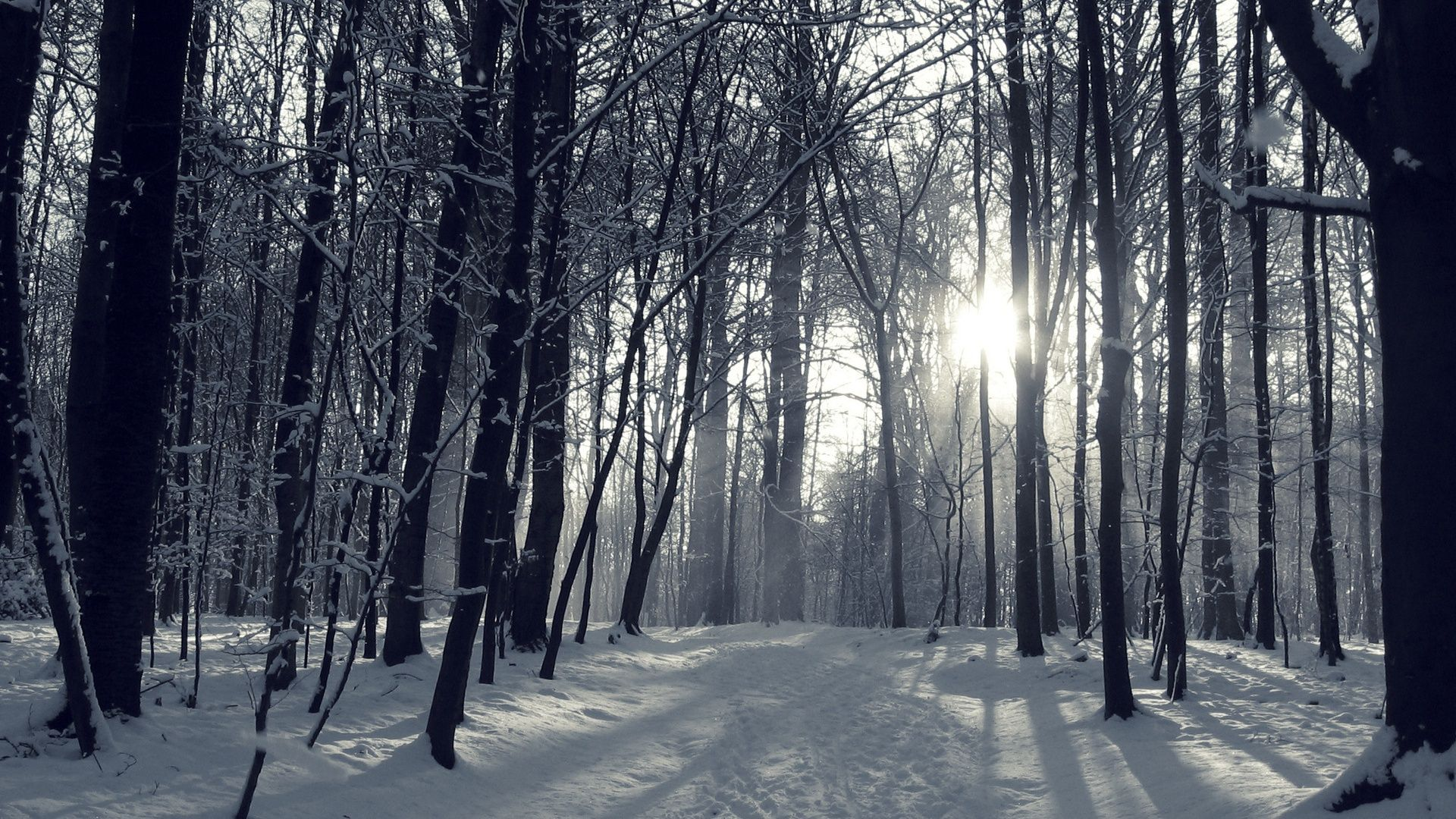 Winter Forest Wallpaper