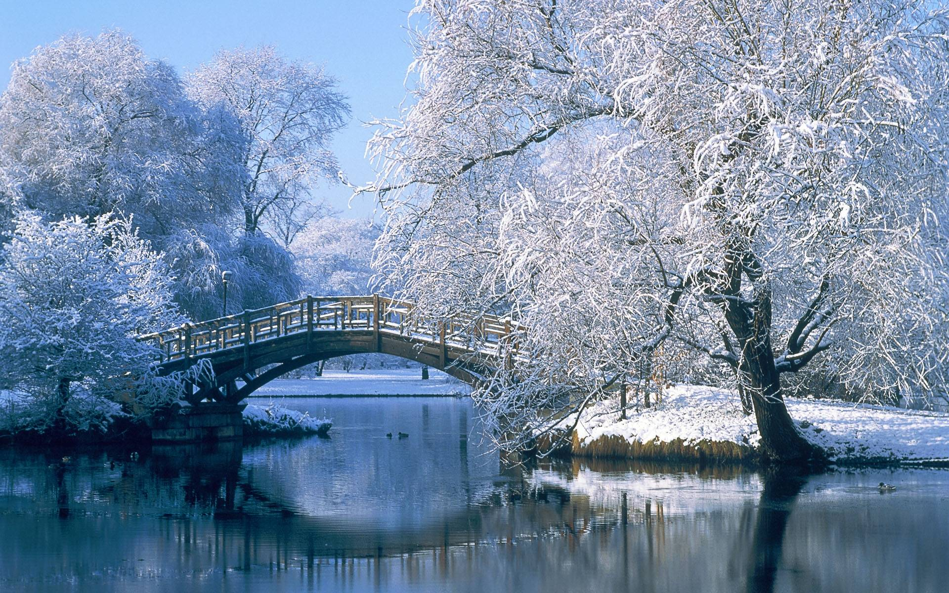 Winter Scenes Free Wallpaper