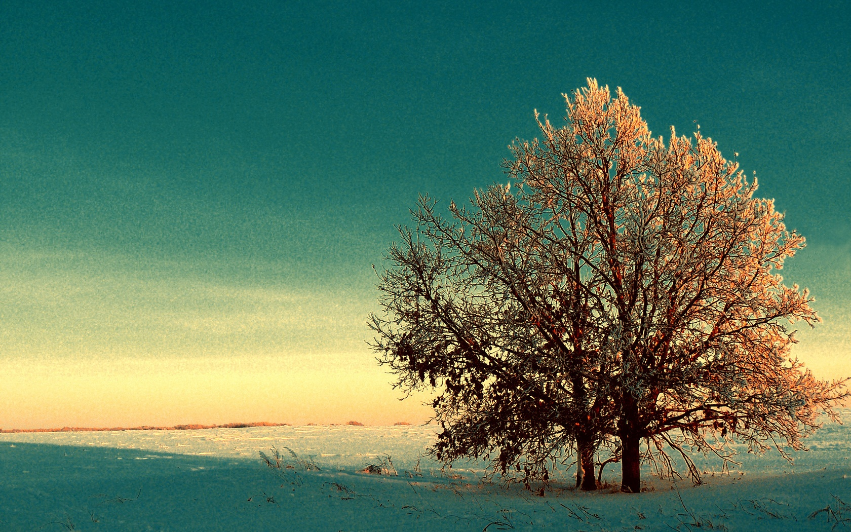 Winter Tree Wallpaper