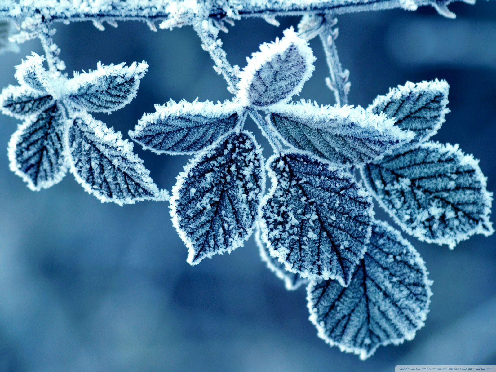 ... Download Winter Wallpapers For Android Gallery