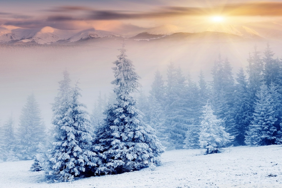 Winter Wonderland Iphone Wallpaper