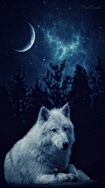 Wolf Cell Phone Wallpaper