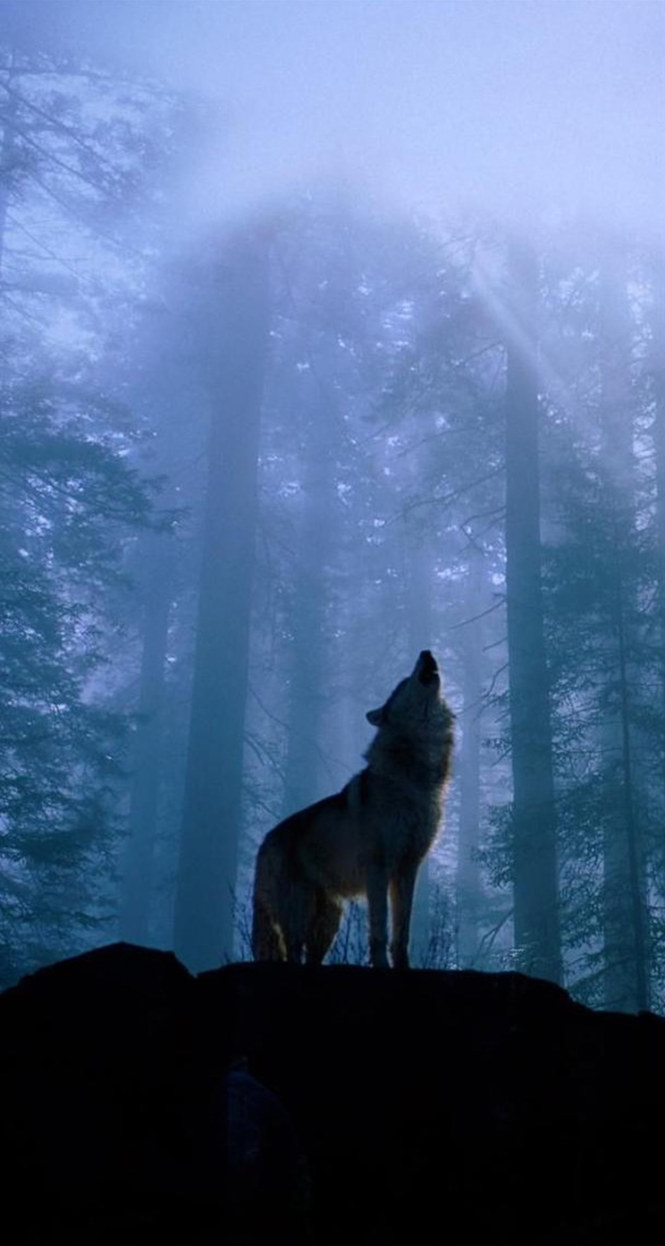 download wolf iphone wallpaper gallery