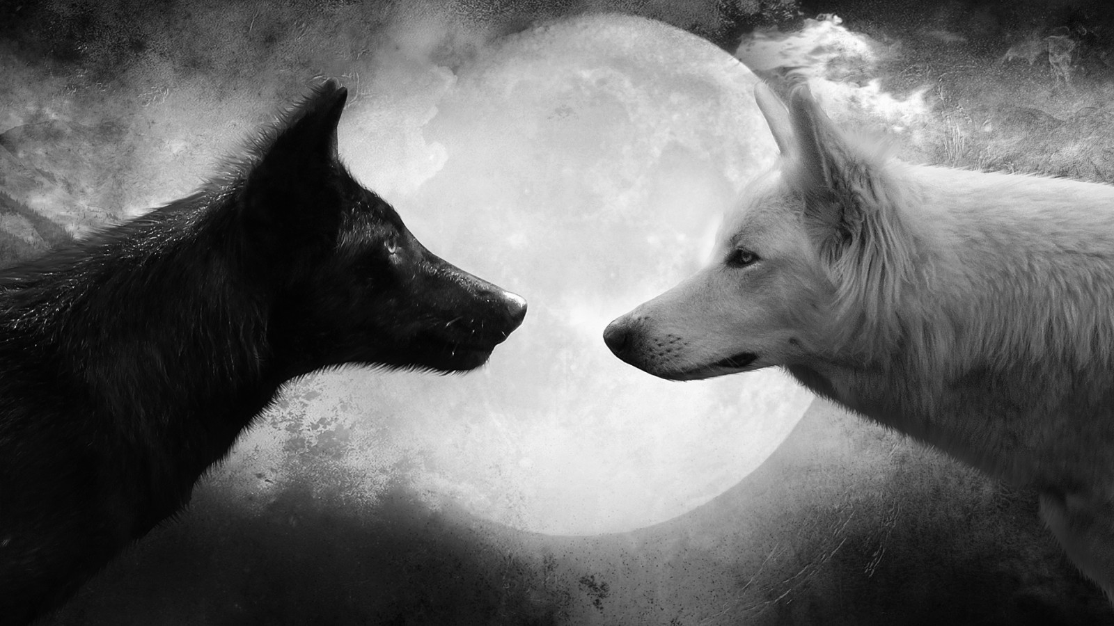 Wolf Wallpaper Black And White