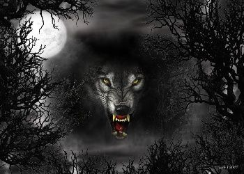 Wolf Wallpaper Download