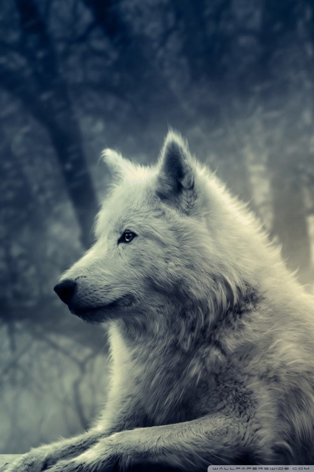 Download Wolf Wallpaper Iphone Gallery