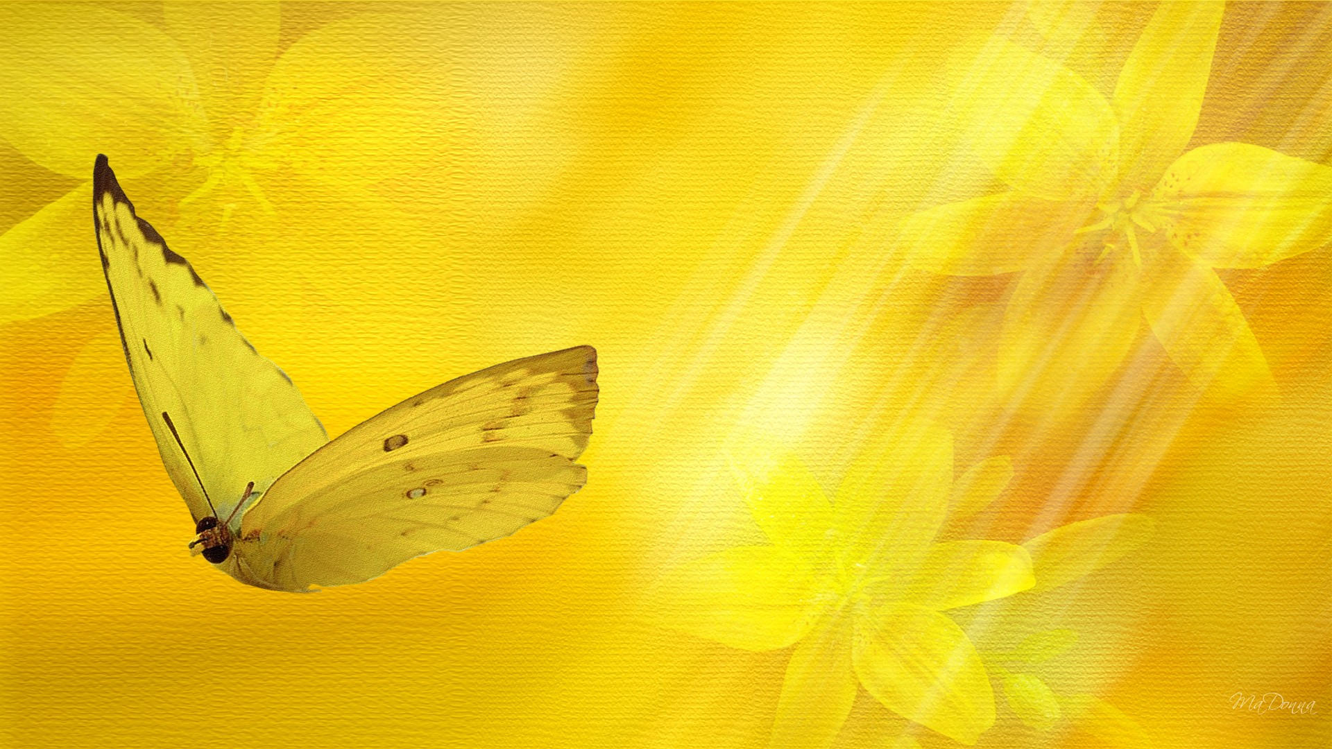 Download Yellow Nature Wallpaper Gallery
