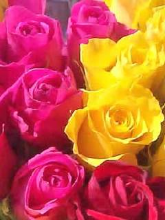 Download Yellow Rose Wallpaper For Mobile Gallery