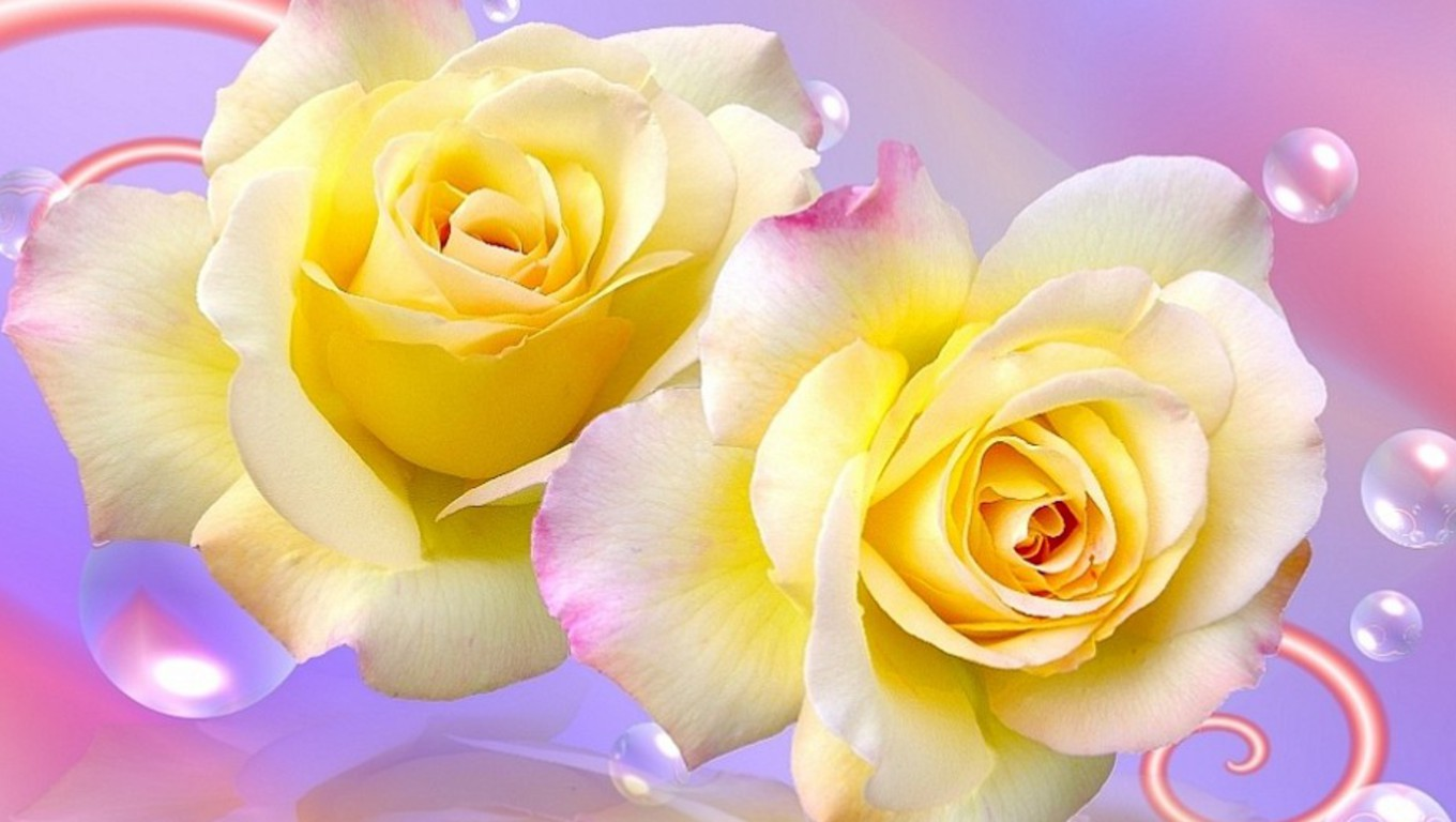 Yellow Roses Wallpaper Download