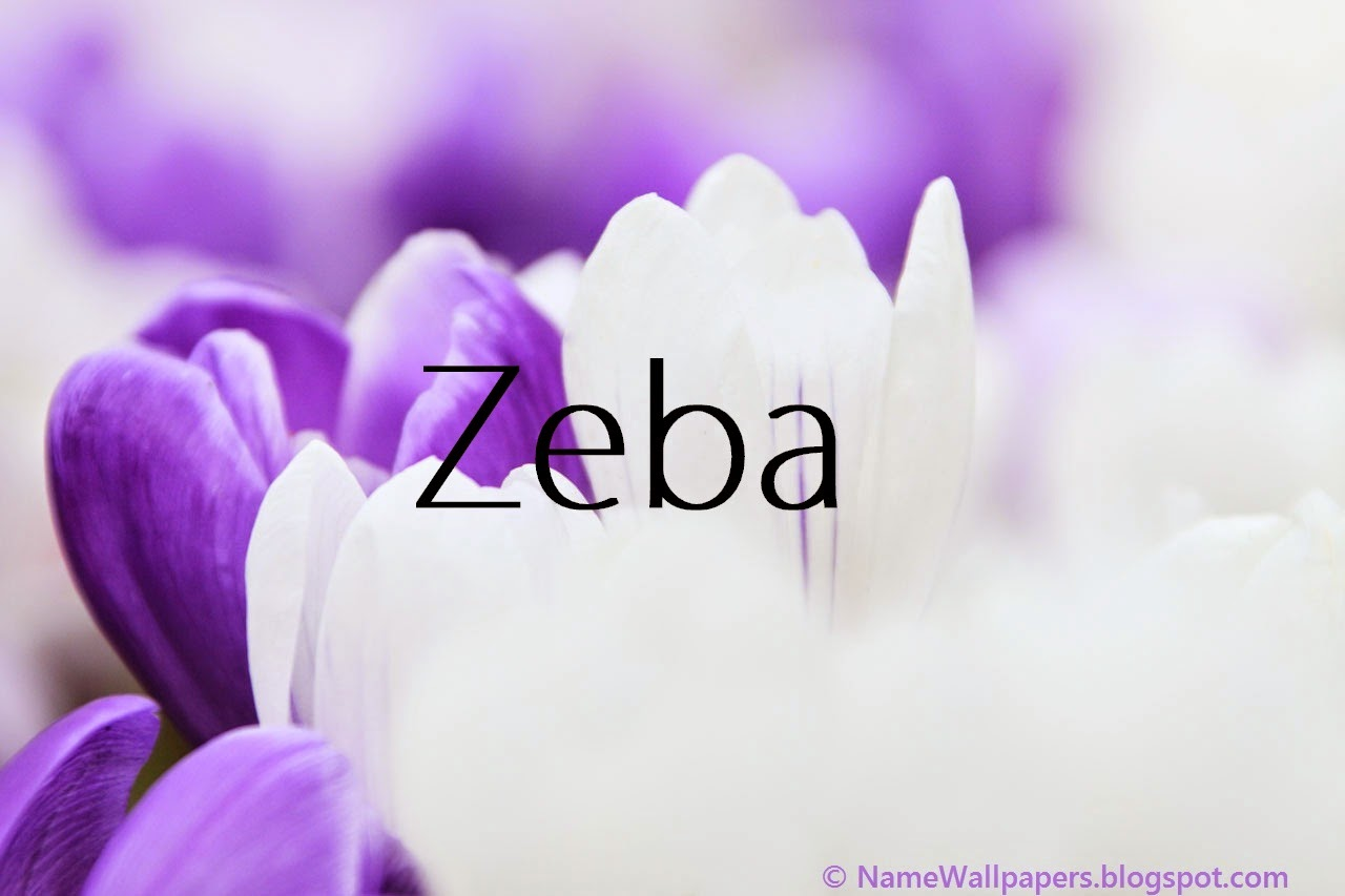 Download Zeba Name Wallpaper Gallery