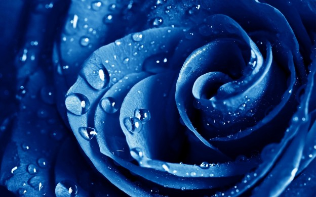 HD Blue Rose Wallpaper