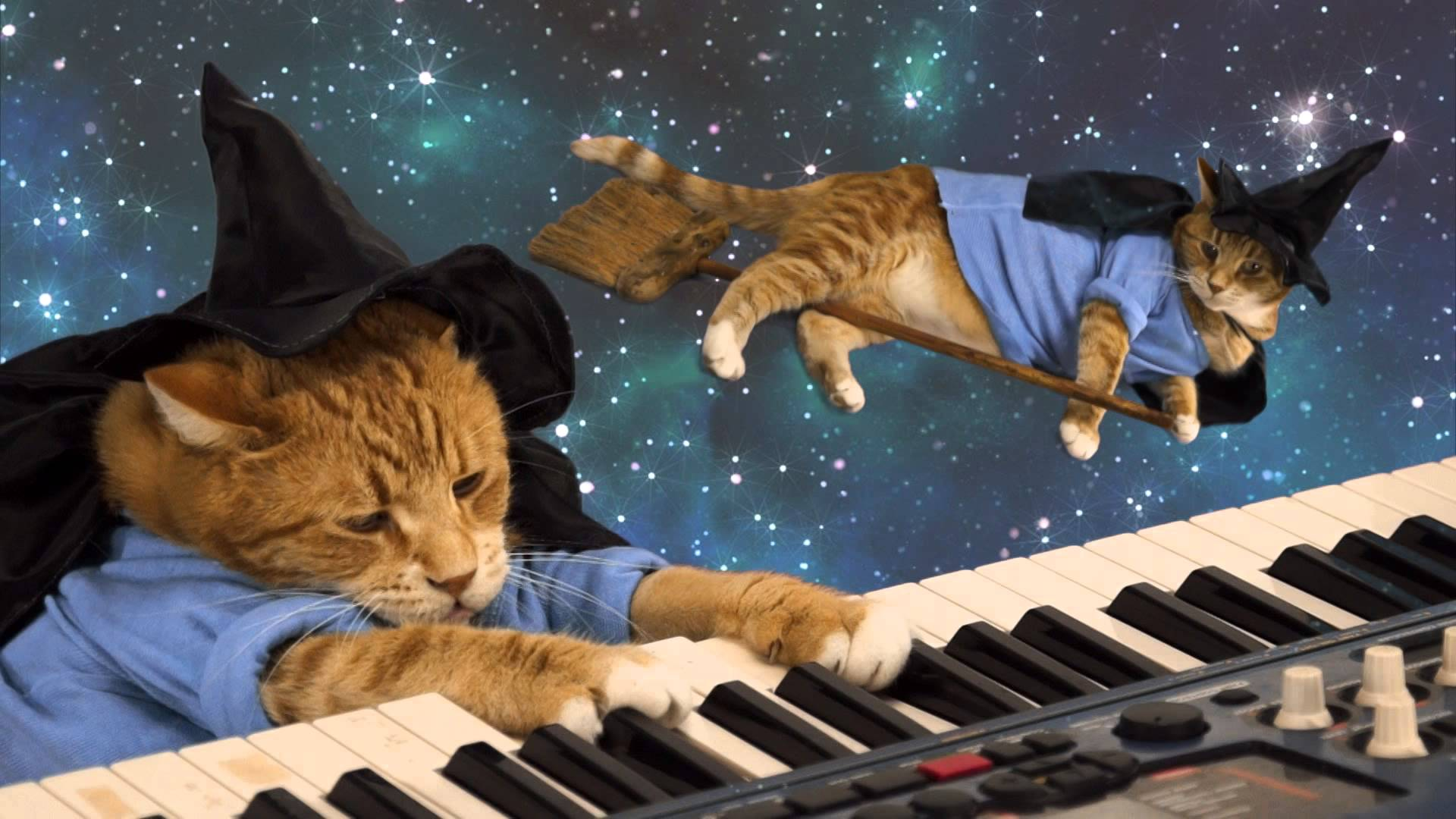 download keyboard cat wallpaper gallery