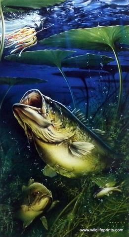 Largemouth Bass Pictures Wallpaper