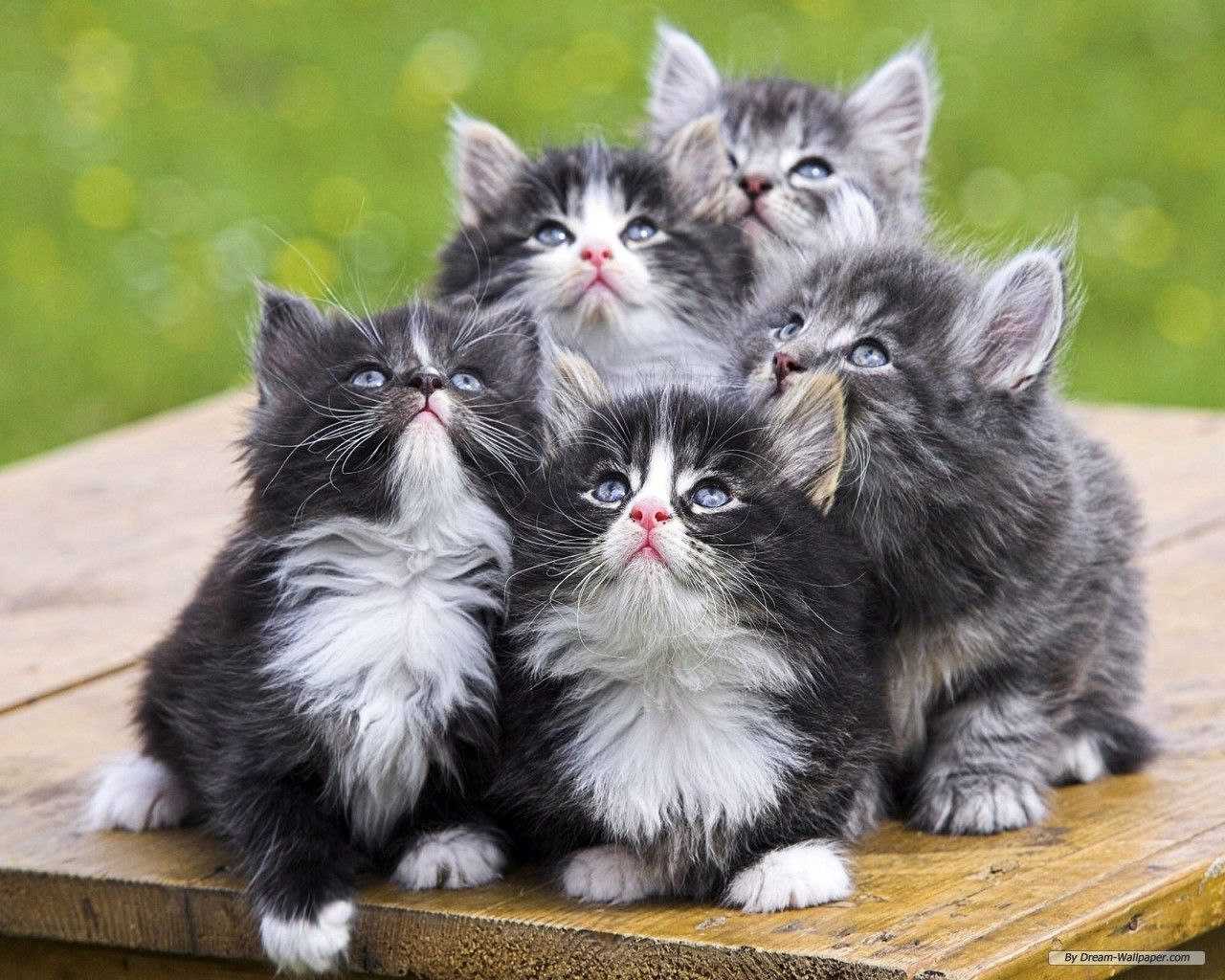 Wallpapers Of Cute Animals