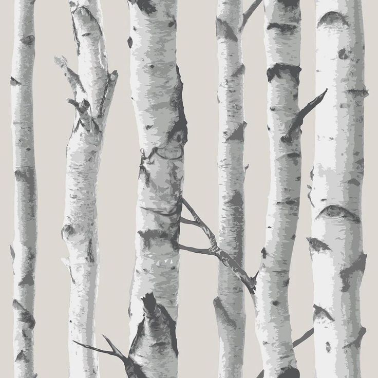 White Birch Tree Wallpaper