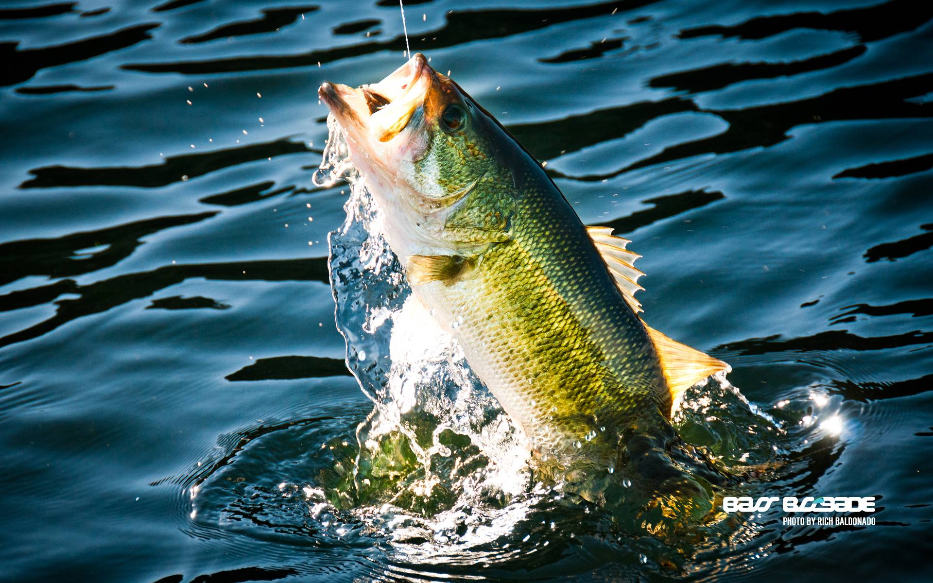 Bass Fishing Wallpapers