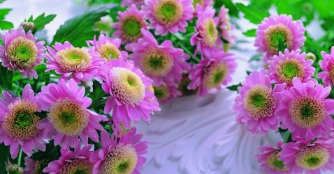 Best Flower Wallpapers Download