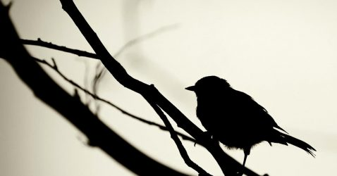 Black Wallpapers With Birds