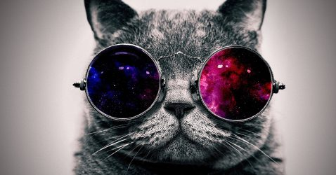 Cat With Glasses Wallpapers