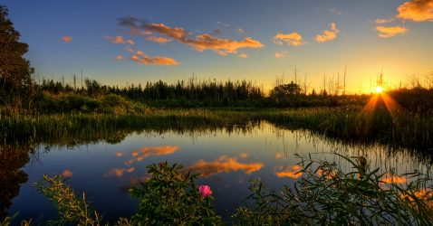Everglades Wallpapers
