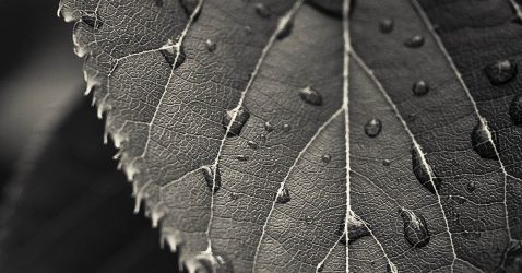 Grey. Leaf Wallpapers