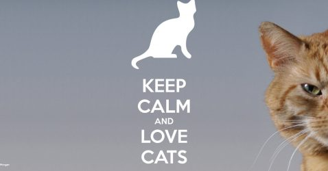 I Love Cats Wallpapers