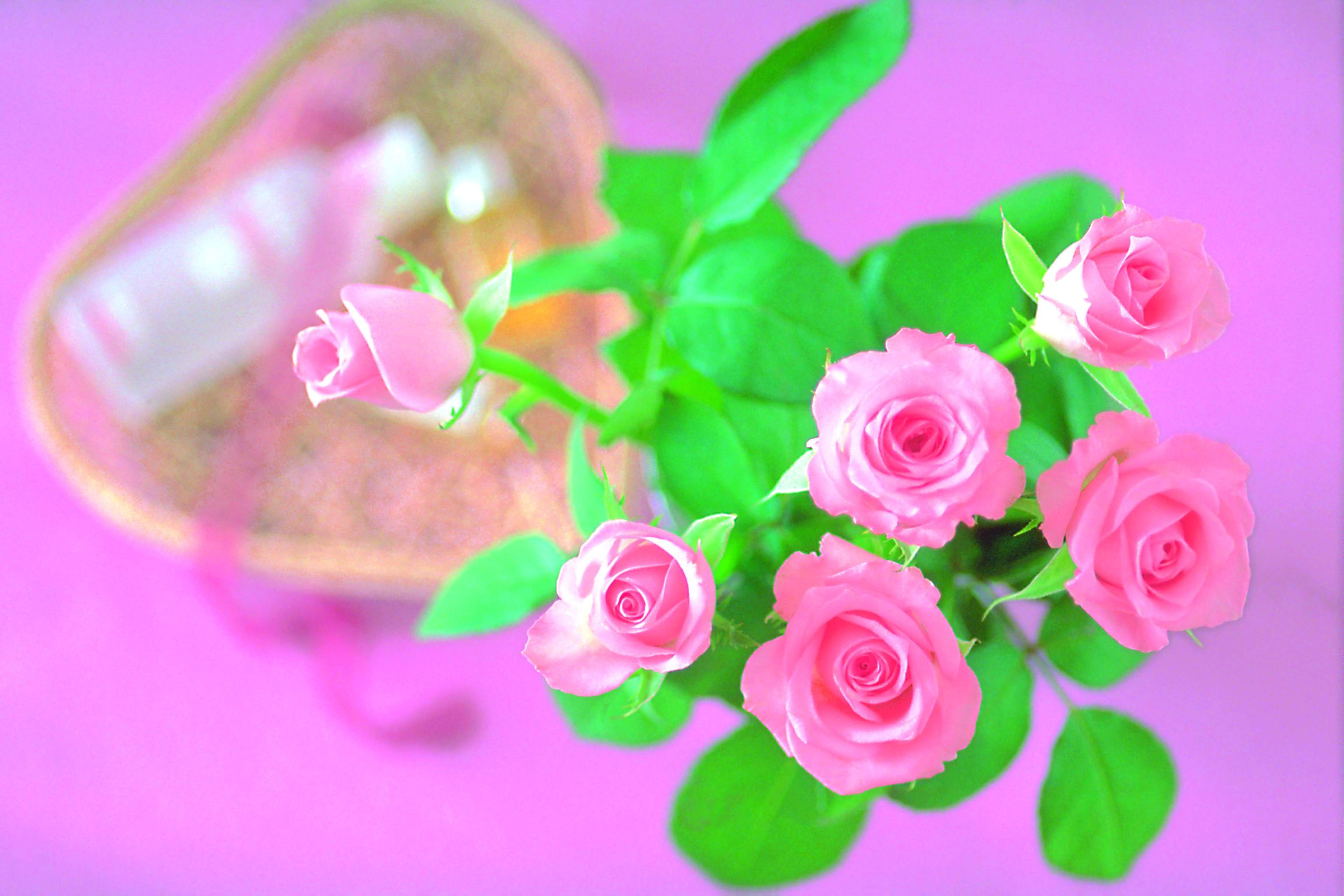 Light Pink Roses Wallpapers