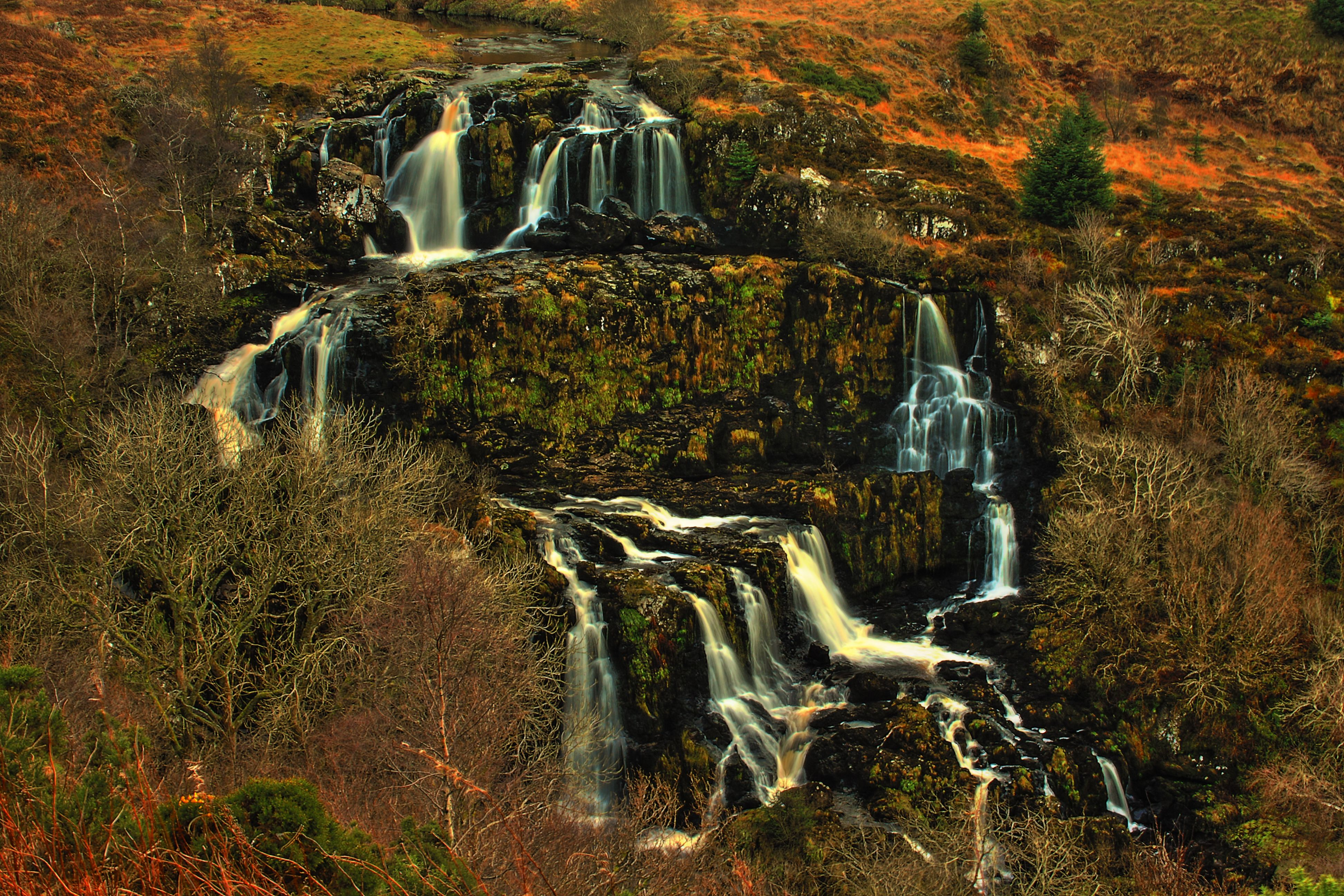 Loup Of Fintry Wallpapers