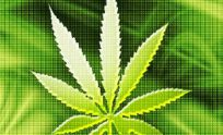 Marijuana Cell Phone Wallpapers