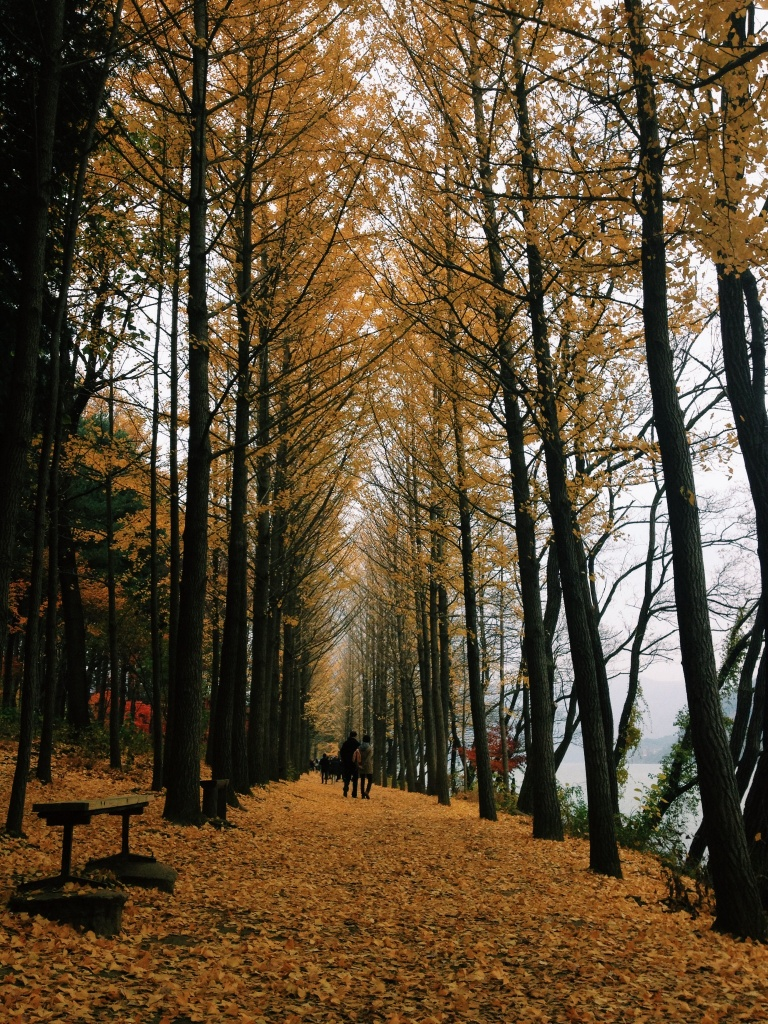 Nami Island Wallpapers