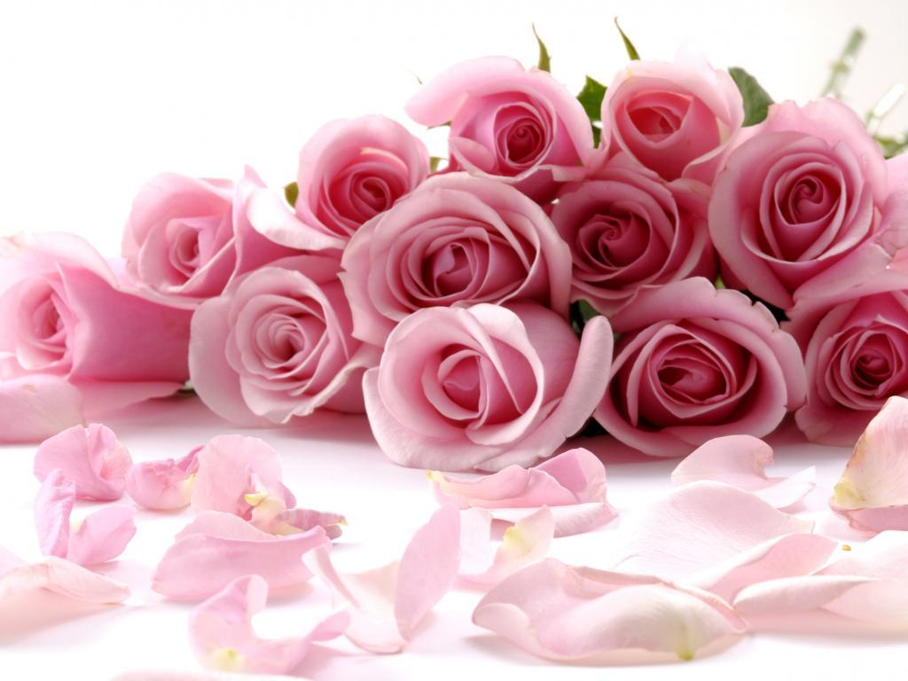 Pictures Of Roses Flowers Wallpapers
