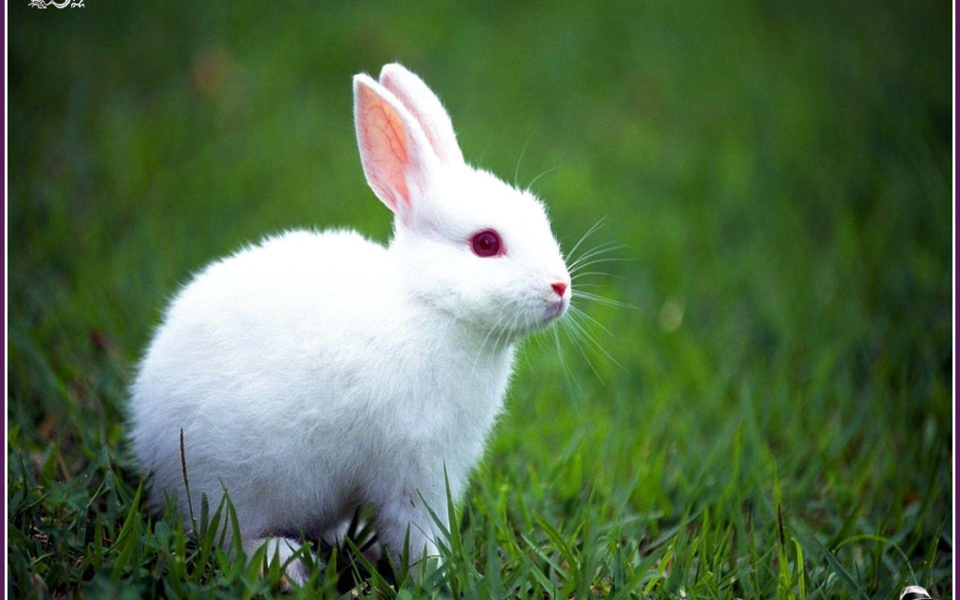 Rabbits Wallpapers