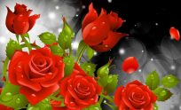 Red Rose Flowers HD Wallpapers