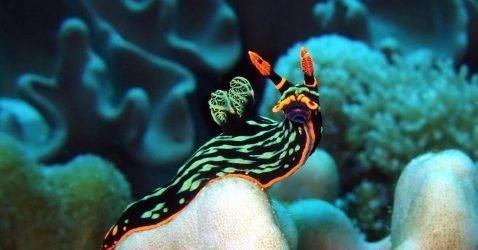 Sea Slug Wallpapers