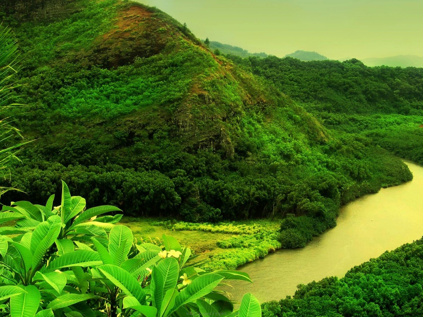 Wallpapers Nature Beauty Green