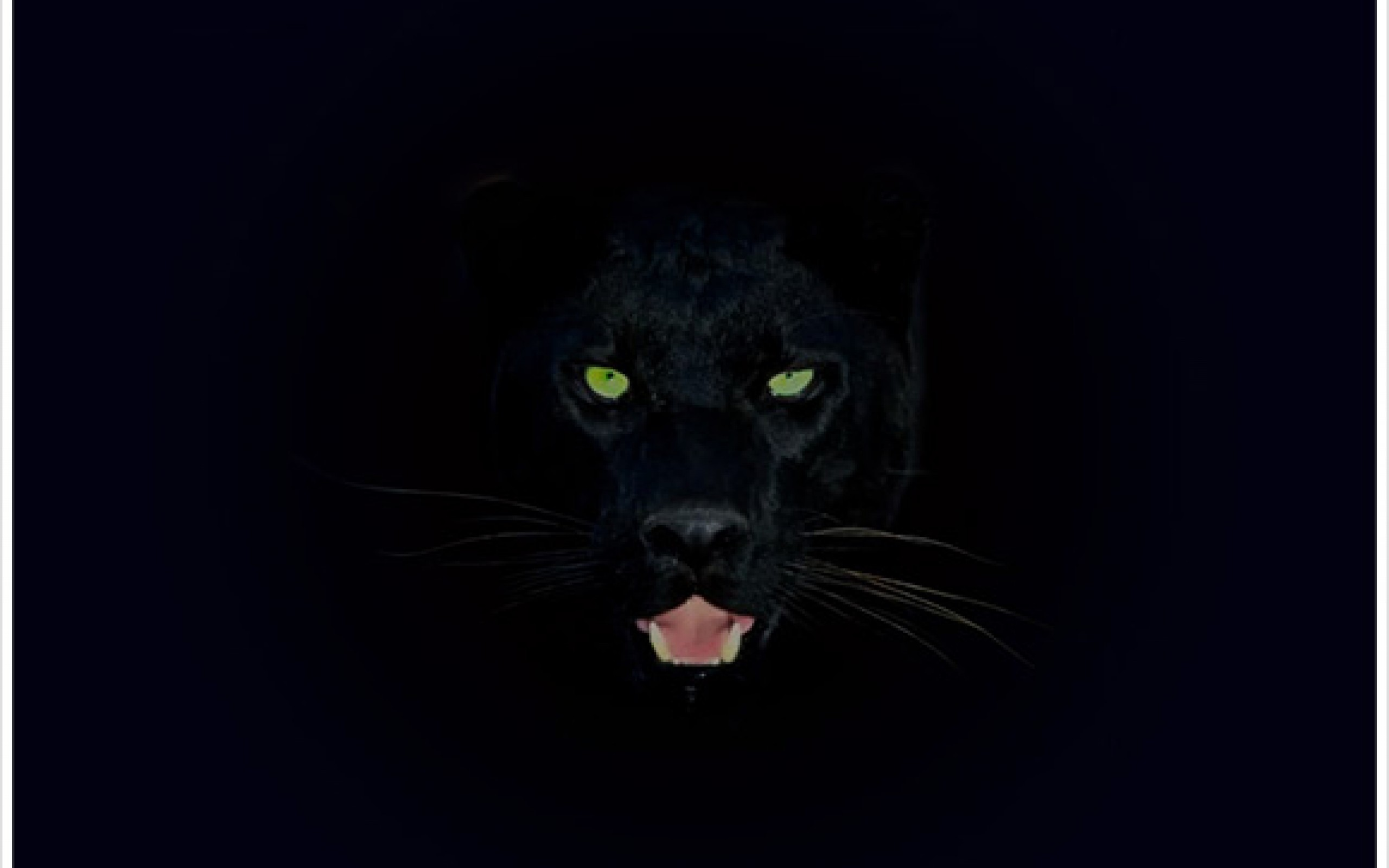 Wallpapers Panther
