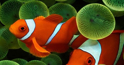 iPhone 5 Fish Wallpapers