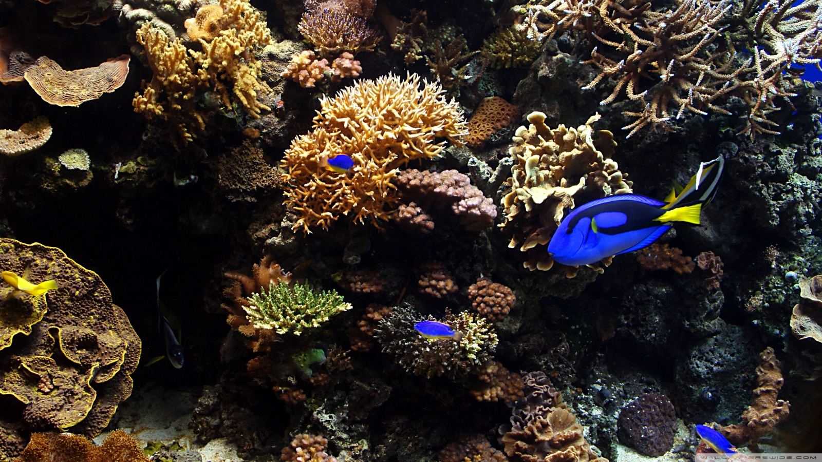 Aquarium Fish Wallpapers HD