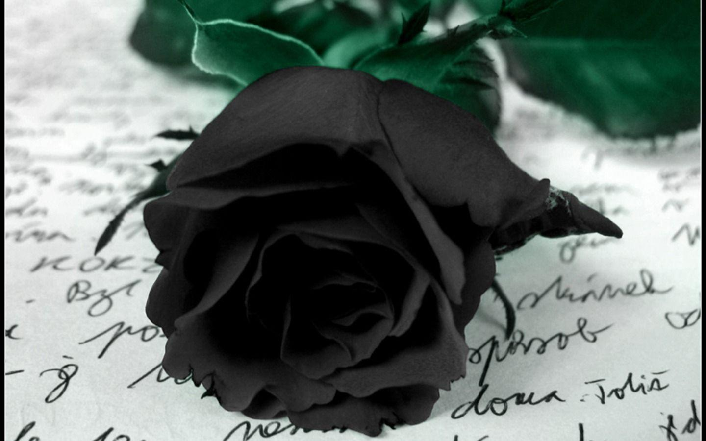 Black Rose HD Wallpapers