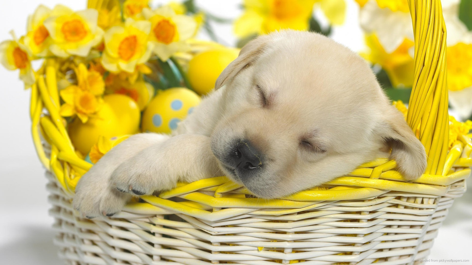 Cute Easter Wallpapers